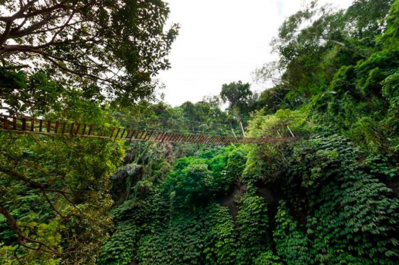 Keindahan Sungai Ayung